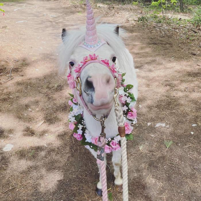 hampstead unicorns